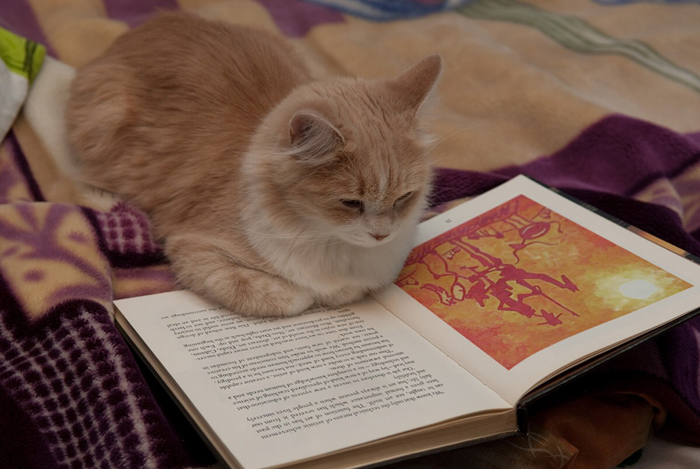 Cat reading The Lone Quixote Letters